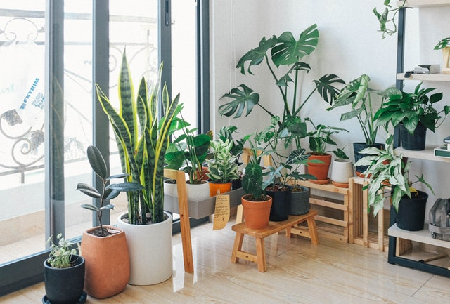 How to Get Rid of Ants from Potted Plants in Your Home